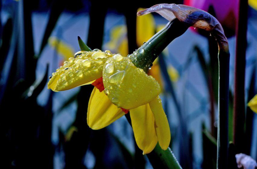 Fiore dopo la Pioggia