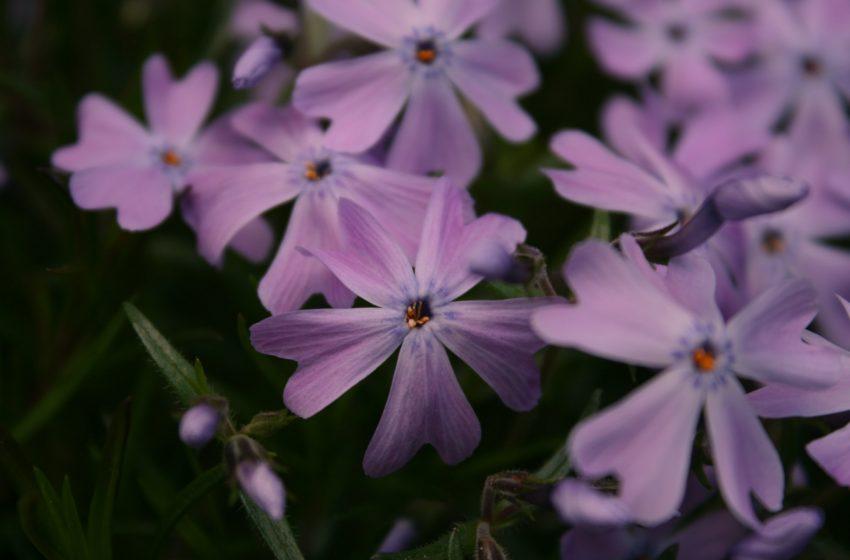 Violette In Macro