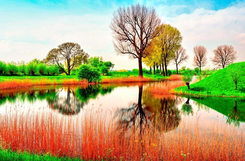 Natura Colorata