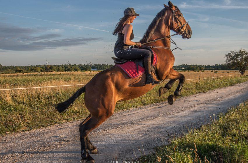 Cavallo che esegue un salto