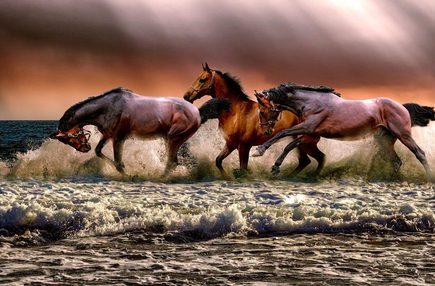 Cavalli che Corrono in Mare