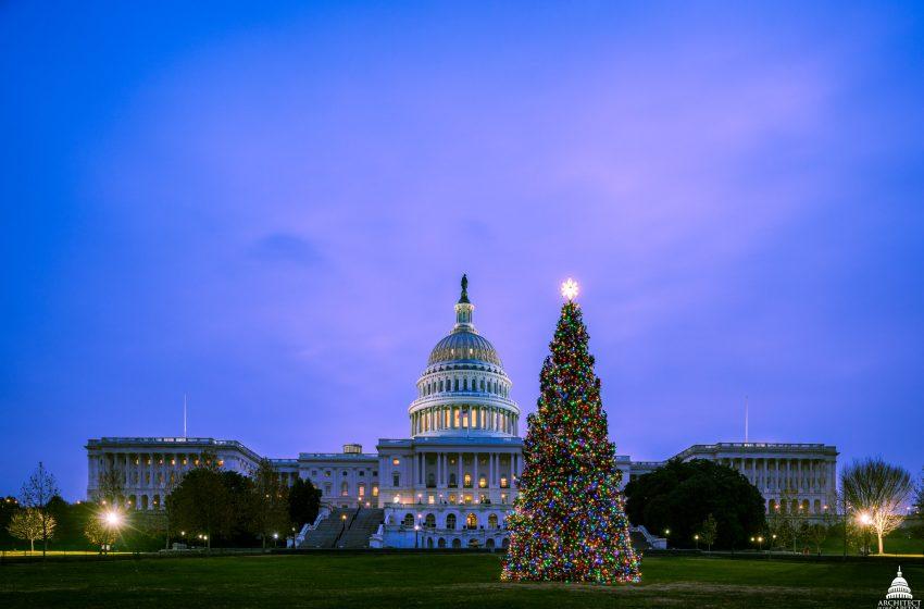 Albero di Natale a Washington