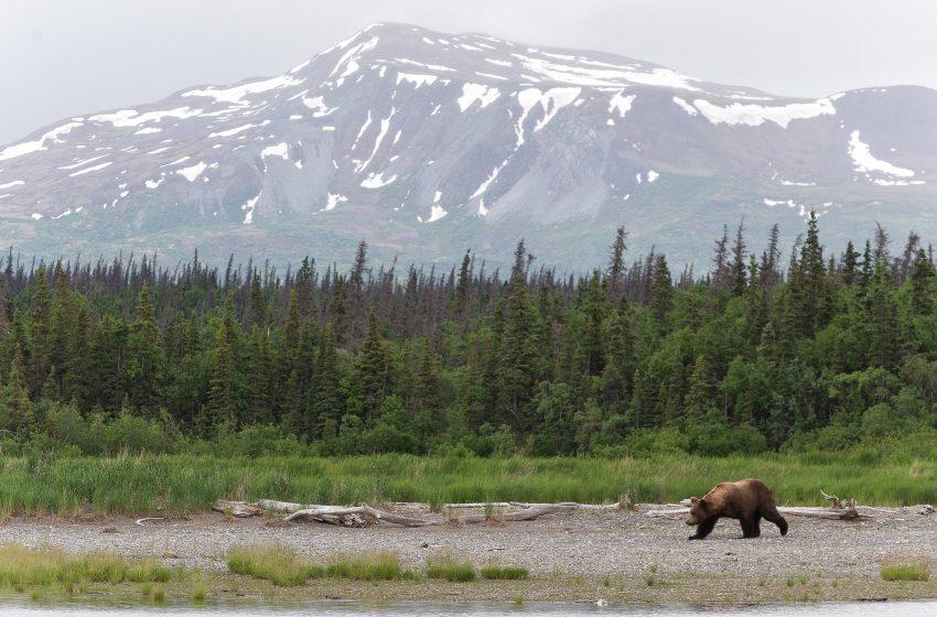 Orso in un Paesaggio Montuoso
