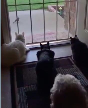 3 Gatti alla porta e un Cane…come andrà a finire?