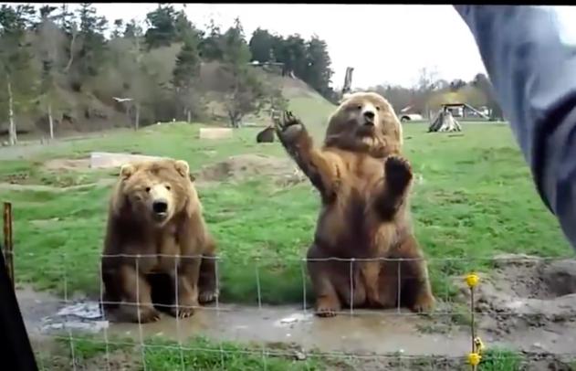 Saluti dagli Orsi