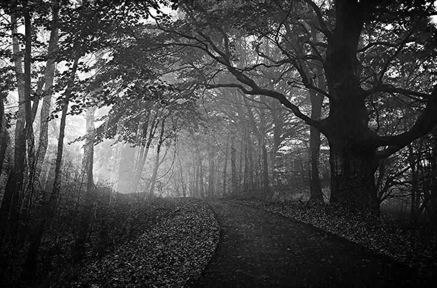 Foresta in Bianco e Nero