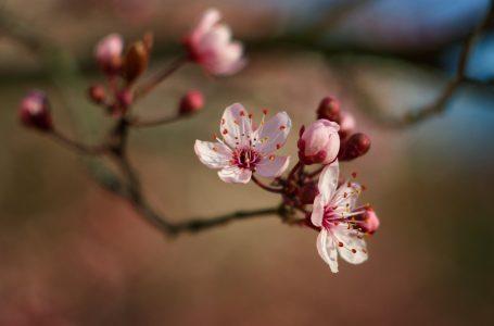 Fiore Appena Sbocciato